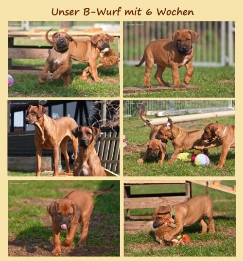b-wurf-6wo-small