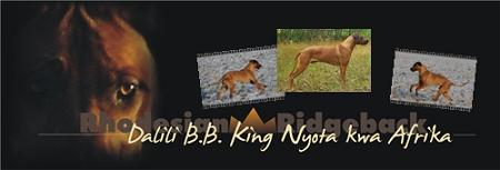 dalili-bb-king_banner_neu